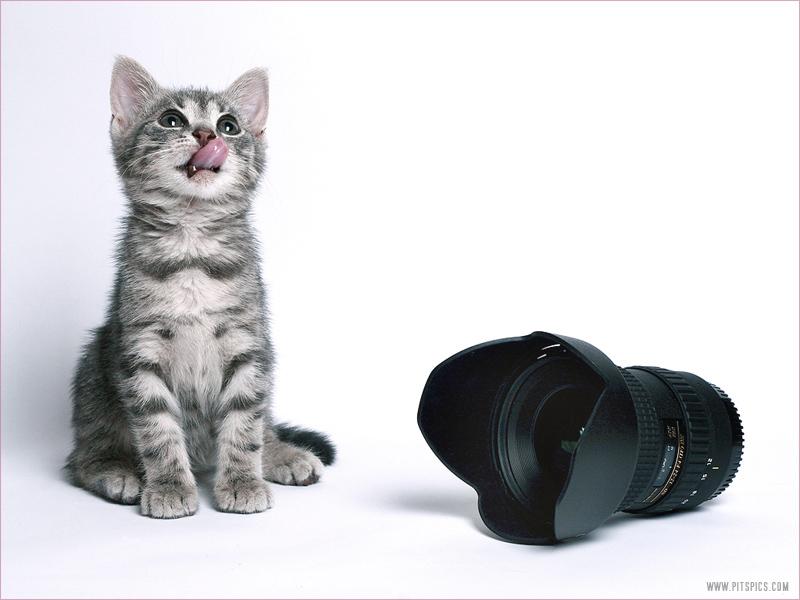 Katze oder Objektiv...