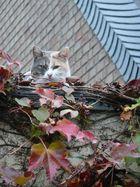 Katze passen zum Laub