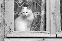 "Katze ""Projekt analoge Fotografie"""