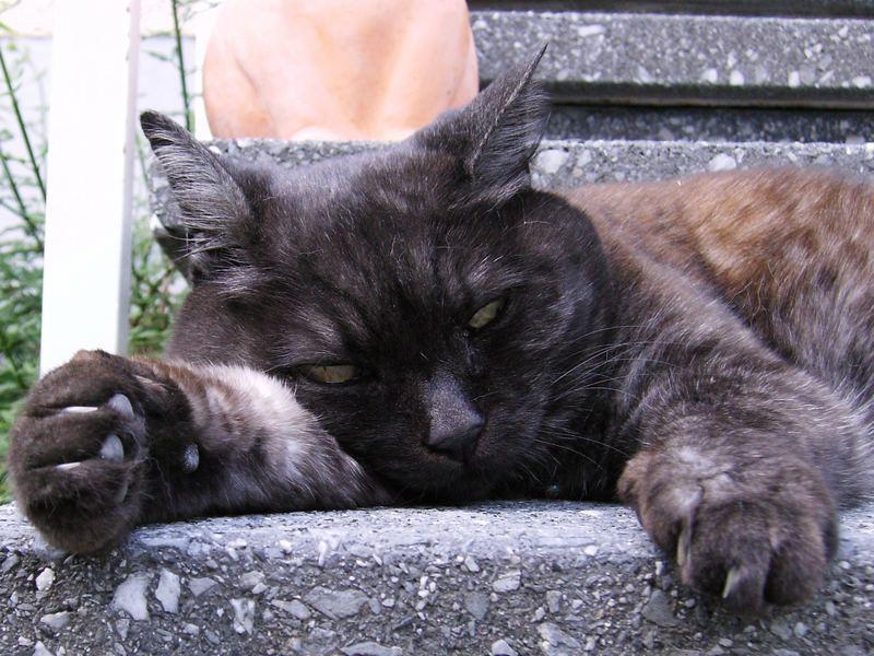 Katze ruht sich aus