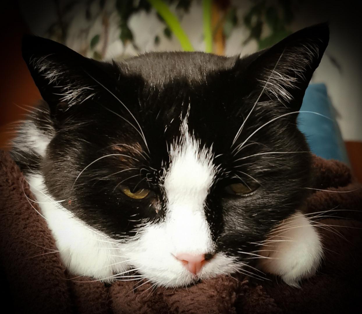 Katze schaut Bares für Rares