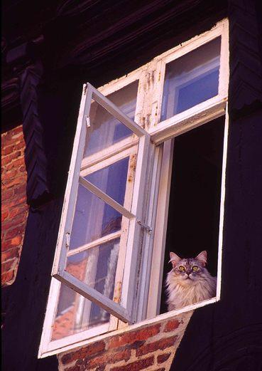 Katze schaut mich an