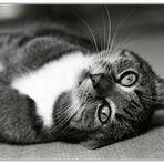 Katze, sehr albern