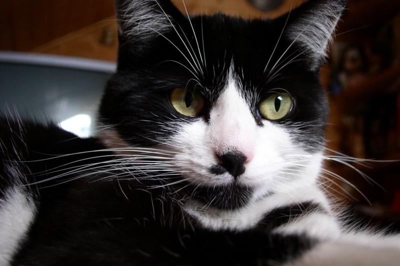 Katze Sheila