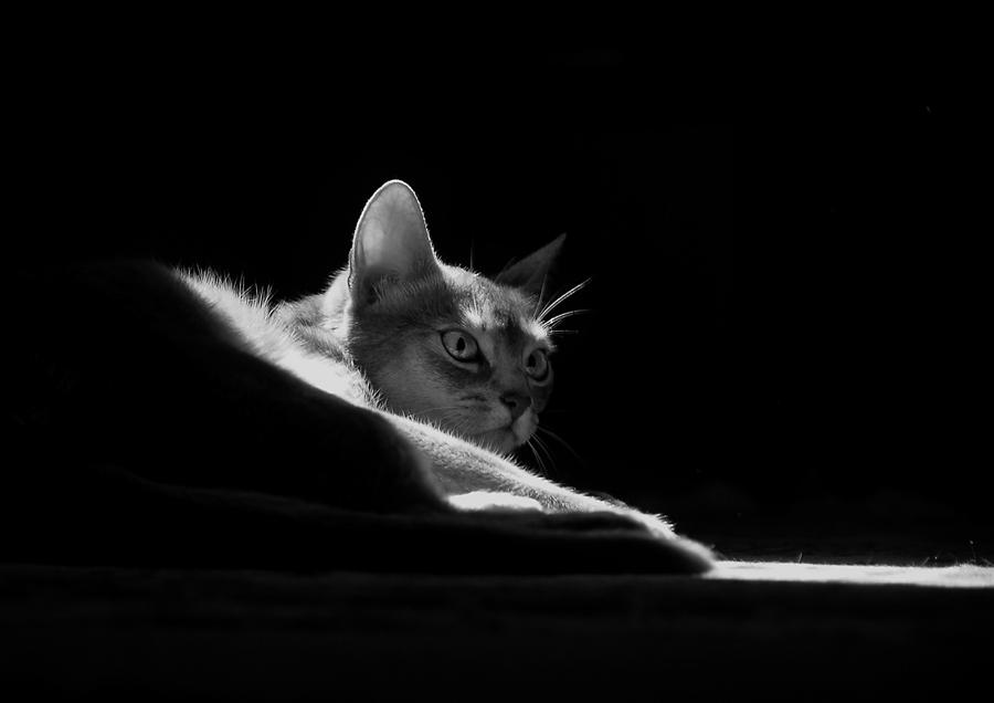 Katze sw