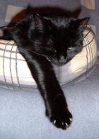 Katze Trixi 2