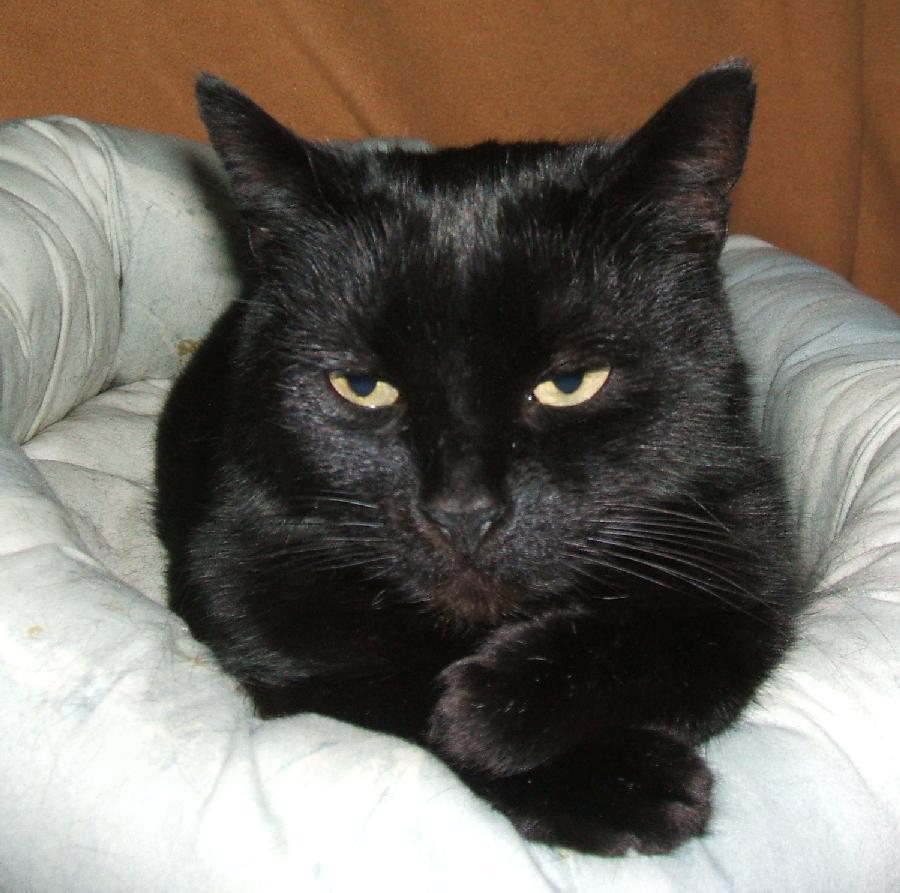 Katze Trixi 3