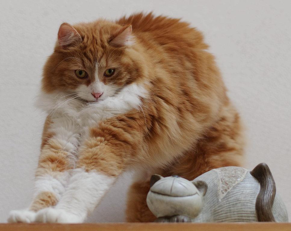 Katze und Katze