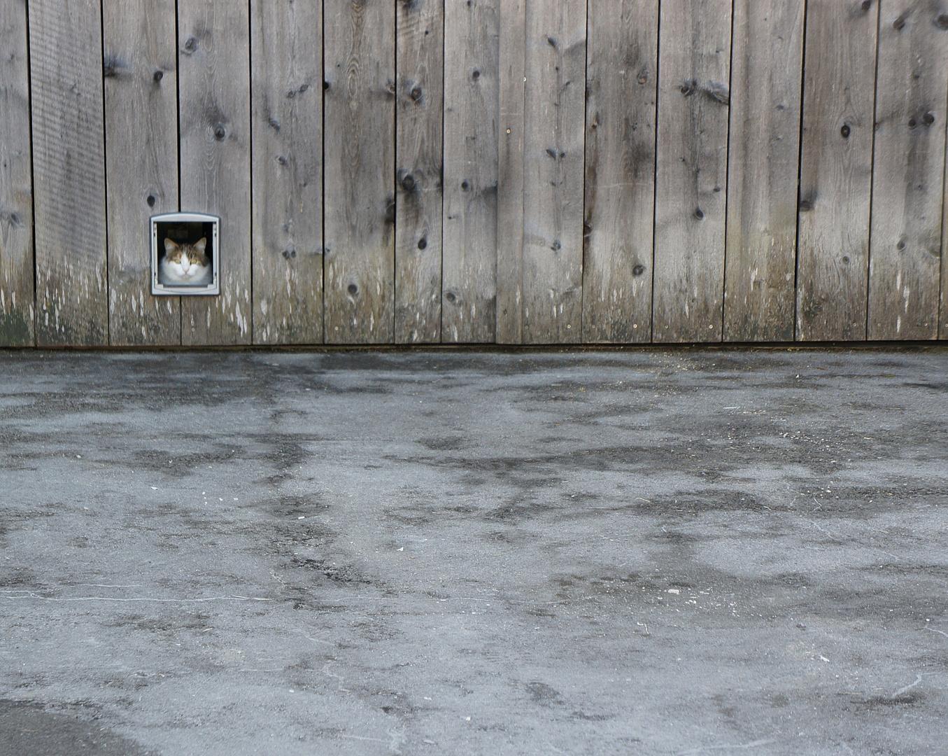 Katze (unscharf) guckt, was da so los ist