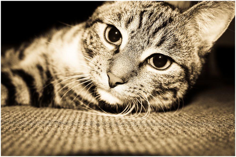 Katze unterm Bett Foto & Bild | tiere, haustiere, katzen