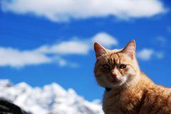 Katze vor Berglandschaft