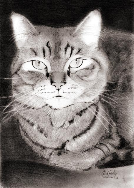 Katze Vor Dem Fernseher Bild: Katze Vor Dem Ofen Foto & Bild