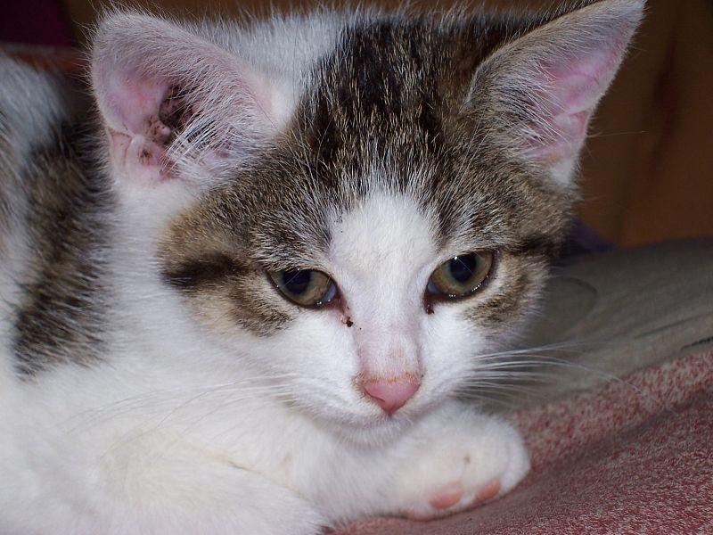 Katze Zum Ausmalen Foto Bild Tiere Haustiere Katzen Bilder Auf