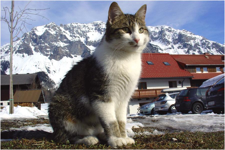 Katze zum streicheln...