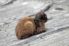 Katzen -3- Ciqikou