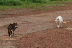 Katzen Annäherung