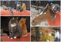 Katzen auf dem Reiterhof