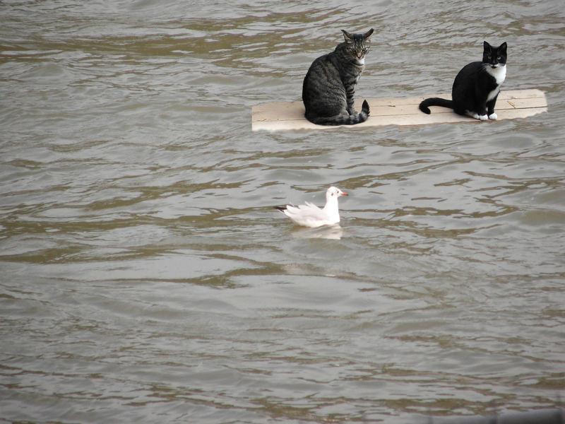 Katzen auf großer Fahrt