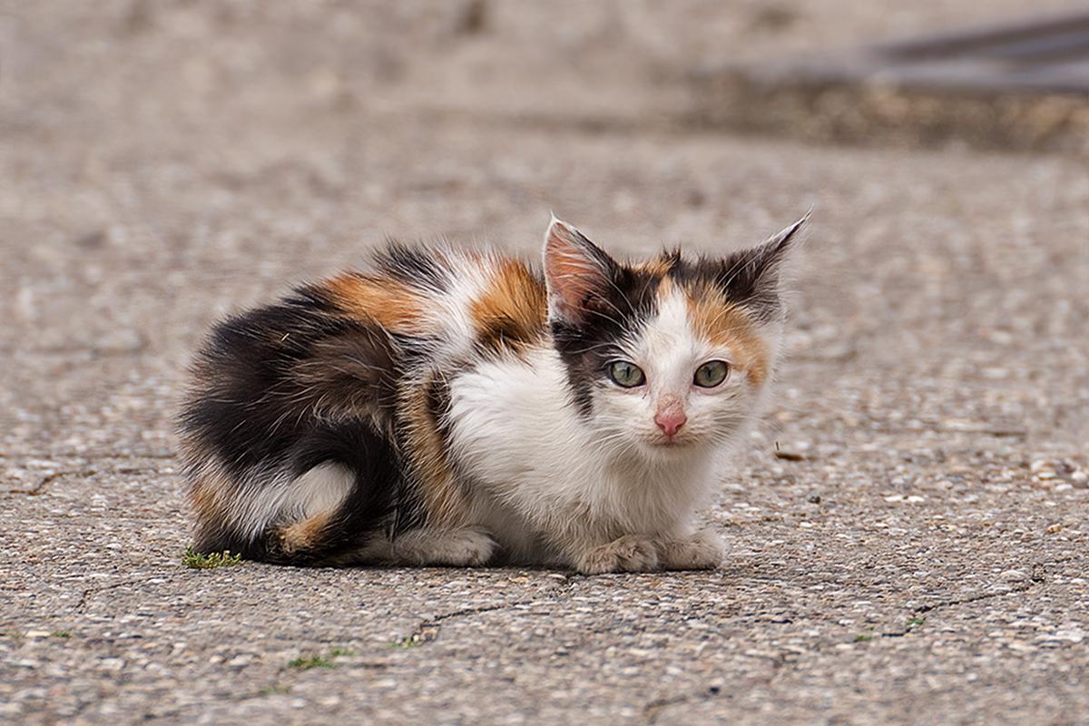 Katzen-Baby Foto & Bild | säugetiere, natur, katzen Bilder ...