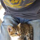 Katzen bei ihrem Tagesablauf