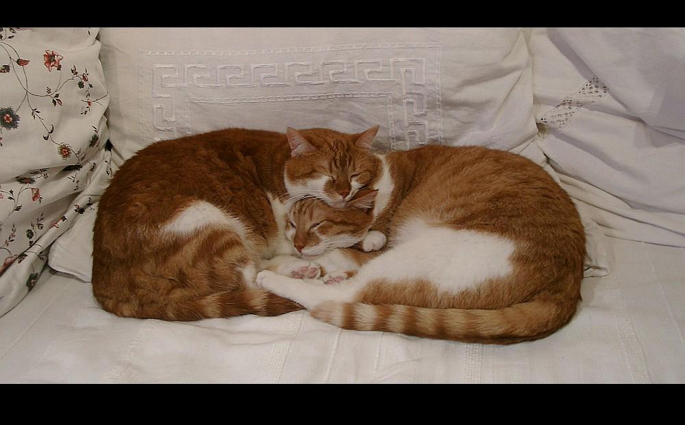 Katzen - Bretzel