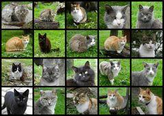 Katzen...