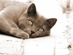 Katzen-Chill