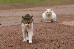 Katzen Desinteresse