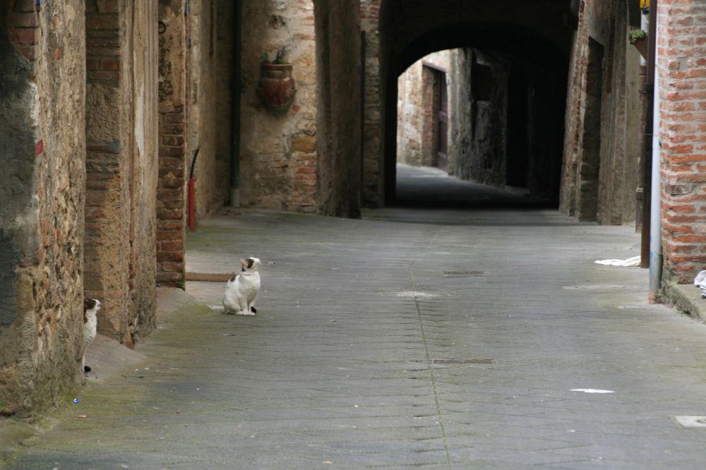 Katzen einer vergangenen Stadt
