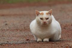 Katzen Gegnerkatze