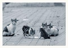 Katzen habens nicht leicht in Spanien...