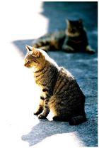 Katzen im HH Hinterhof #2