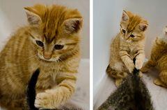 Katzen im Lichtzelt 2
