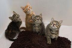 Katzen im Lichtzelt 4
