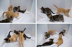 Katzen im Lichtzelt