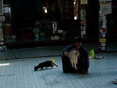 Katzen im Ngaphechaung Kloster