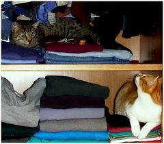 Katzen im Schrank