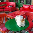 Katzen in einem Kaffee in der Stadt Karpathos