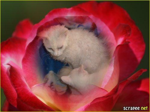 Katzen-in -oder aus der Blume?