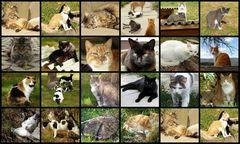 Katzen, Kätzchen...