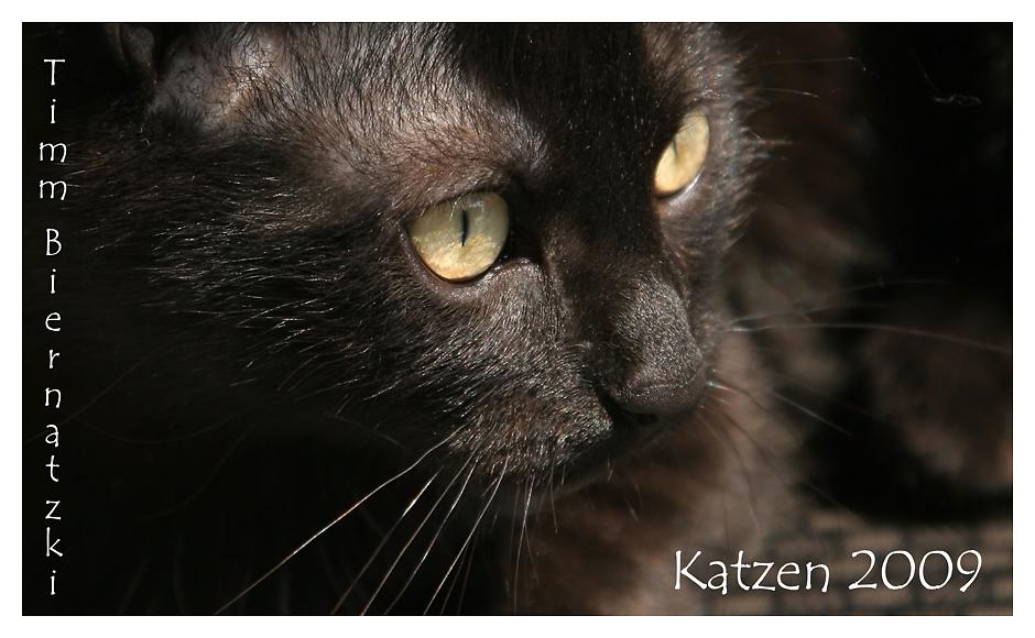 Katzen Kalender 2009