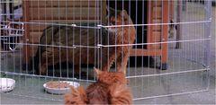 Katzen-Knast