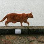 Katzen können doch lesen!