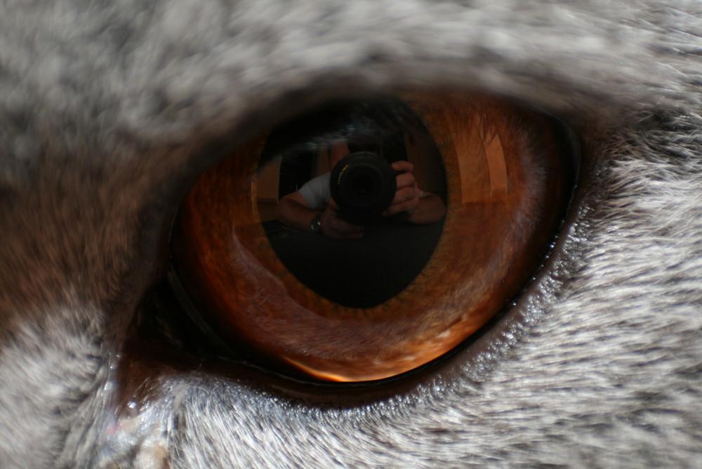 Katzen sehen alles....