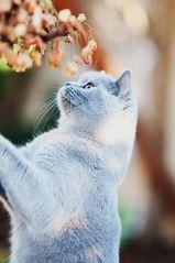 Katzen sind nicht neugierig ;-)