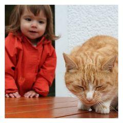 Katzen sollten nicht auf Tischen sitzen.