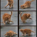 Katzen-Tanz auf dem Eis