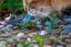 Katzen und Libellen