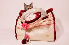 Katzen würden Taschen kaufen II.