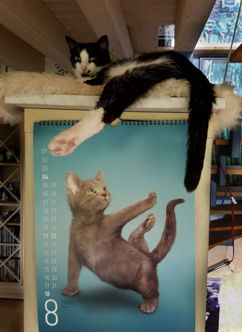 Katzen-Yoga